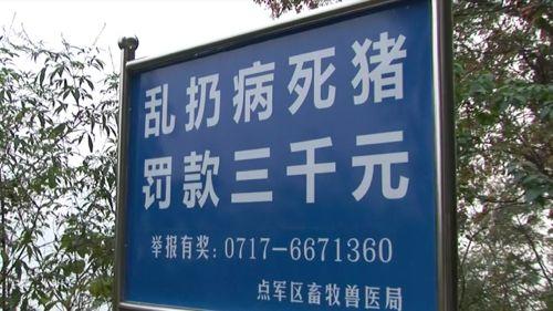 「病死した豚を捨てたら罰金3000元(約5万1000円)」と書かれた看板