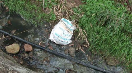 子豚の死骸が袋につめられて捨てられていた。