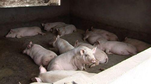 宜昌市の養豚農家