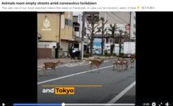 [新型コロナFactCheck] 「都市封鎖の東京に鹿」 アルジャジーラが誤報